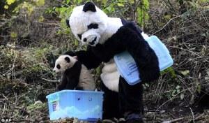 panda-suit2